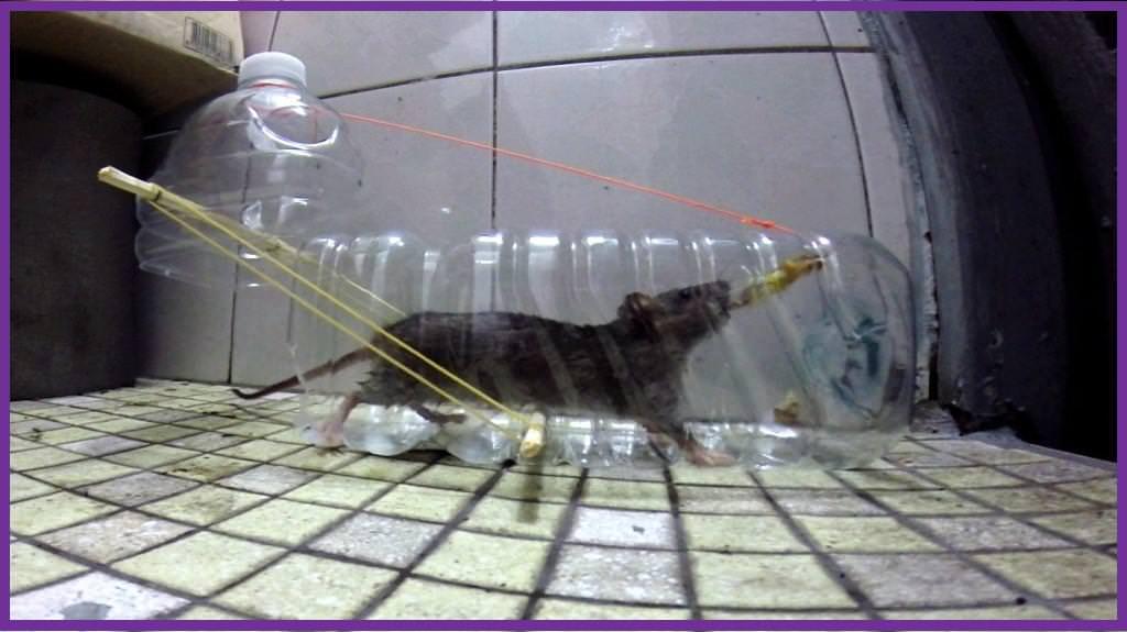 humane plastic bottle rat trap d i y bullseye. Black Bedroom Furniture Sets. Home Design Ideas