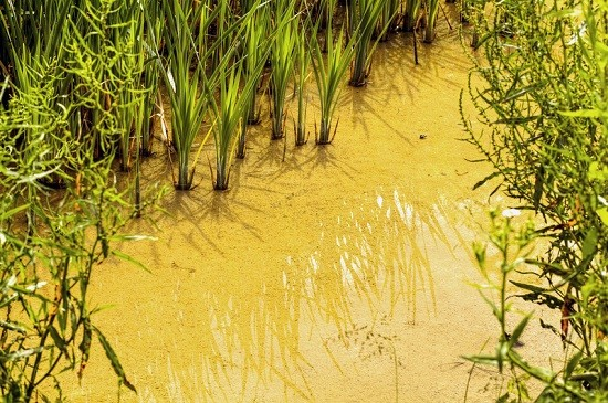 Five Incredible Ways You Can Filter Water From The Natural Resources Surrounding You