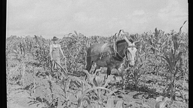 oldtime-farming