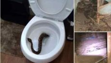 snaketoilet