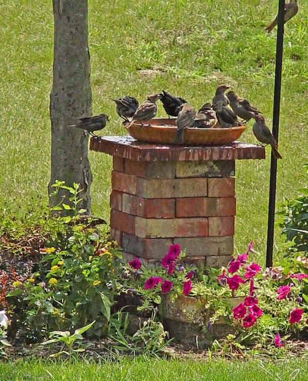 Поилки для птиц садовые своими руками