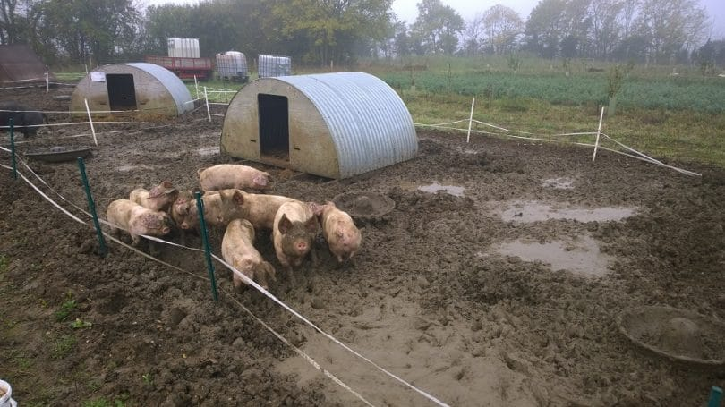 Your Guide To Raising Pigs in a Humane and Healthy Way ...