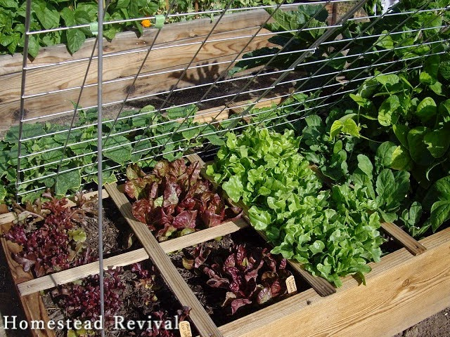 Revive Any Garden Using The Square Foot And French Intensive